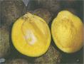 Пахучее манго