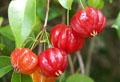 Суринамская вишна